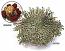 The Amazing Desktop Dinosaur Plant